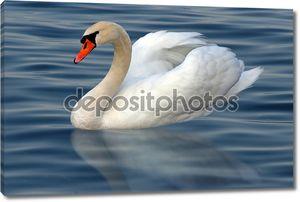 Лебедь в воде