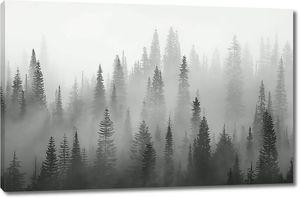 Верхушки елей в тумане
