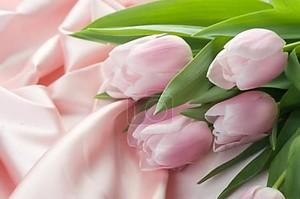 Тюльпаны на фоне шелка