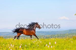 Скачущая лошадь на лугу