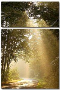 Солнечные лучи падают в туманный лес