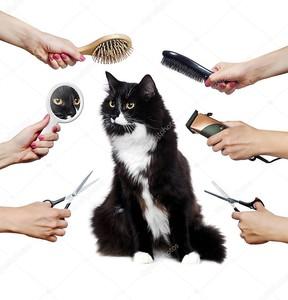 Длинноволосый взрослый чёрно-белый кот во время процедуры ухода