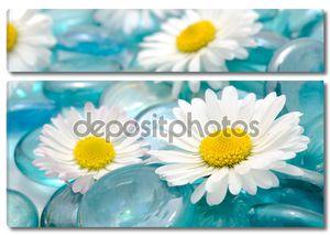 Цветы ромашки на камни синего стекла