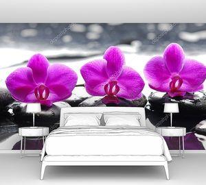 Три цветка орхидеи и  дзен камни