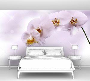 Красивая белая орхидея  на сиреневом