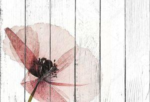 Прозрачный цветок мака