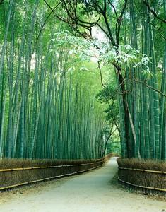 Дорога в бамбуковом лесу