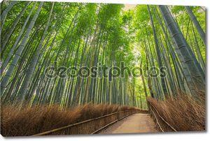 Тропа в бамбуковый лес