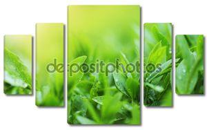 Чайные плантации близко вверх фона