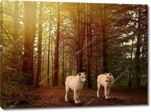 Волки в лесу