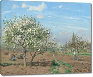 Камиль Писсарро. Фруктовый сад в цвету, Лувесьен