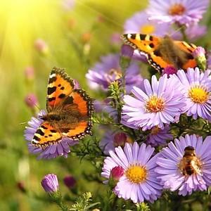 Бабочка на цветах в лучах солнца