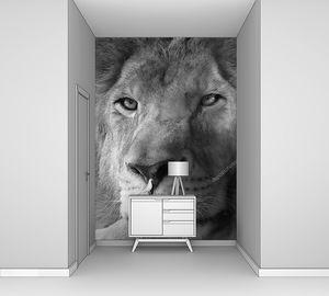 Лев крупный портрет