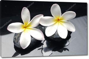 Цветок Франжипани на гальке
