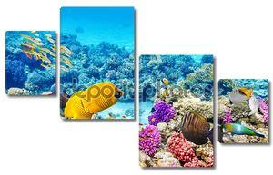 Мир разных тропических рыб