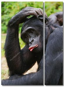 Печальный портрет шимпанзе
