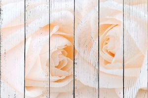 Две бежевые розы