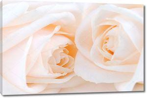 Бежевый розы