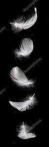 Падение перо белого лебедя, изолированные на черном фоне