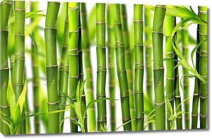 Фон с зеленым бамбуком