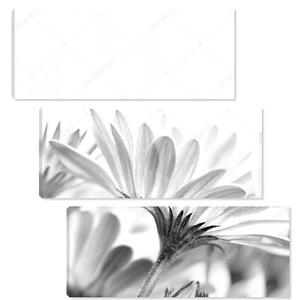 Нежные ромашки цветы