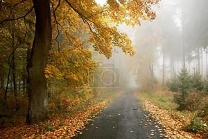 лес путь Осенний лес