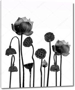 Цветки и  коробочки лотоса в черно-белом