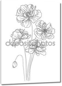 цветок ручной обращается Маки