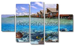 Тропические воды Мальдивы