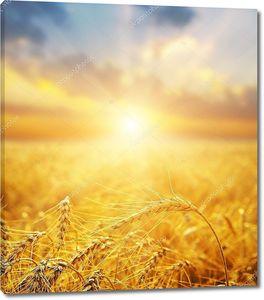 Пшеничное поле и закат