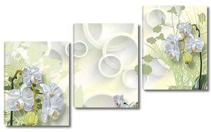Белые орхидеи с зелеными листьями, белые кольца