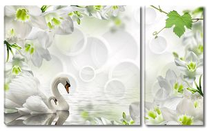Белые кольца, два лебедя и большие белые цветы