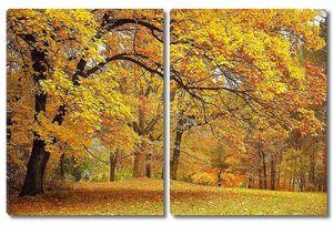 Осень , золотые деревья в парке