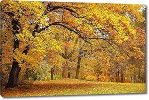 Осень / золотые деревья в парке