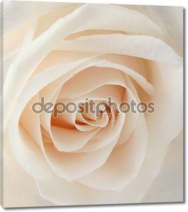 Нежно-розовая роза крупным планом