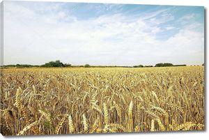 Летние сельского хозяйства сено поле
