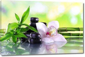 Побег бамбука с орхидеей и камнями