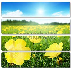 поле весенних цветов