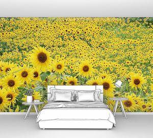 Красивое поле из желтых подсолнухов