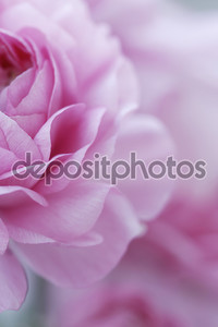 пастельные розовые цветы