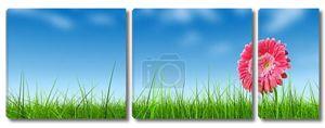 травой поле и цветок