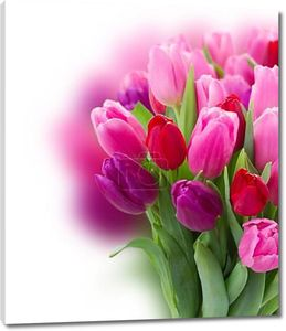 Bouquet of  pink and purple  tulip flowers