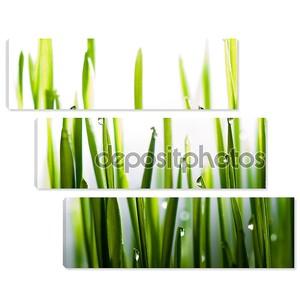 Капли воды на свежей травы крупным планом