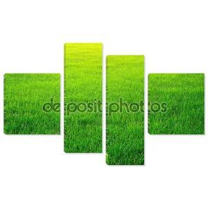Зеленая трава фон.