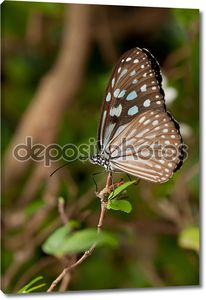 Бабочки на листке