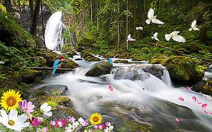 Водопадные потоки в лесу