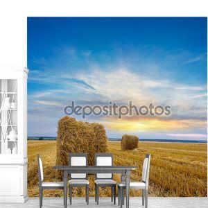 Вечером Пшеничное поле