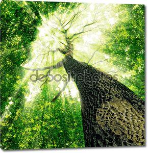 Магическое дерево