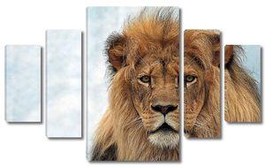 Портрет старого льва