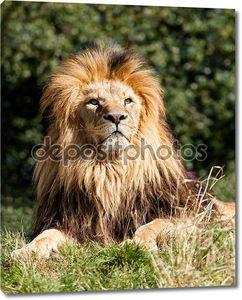Гордость величественных Лев, сидя в траве
